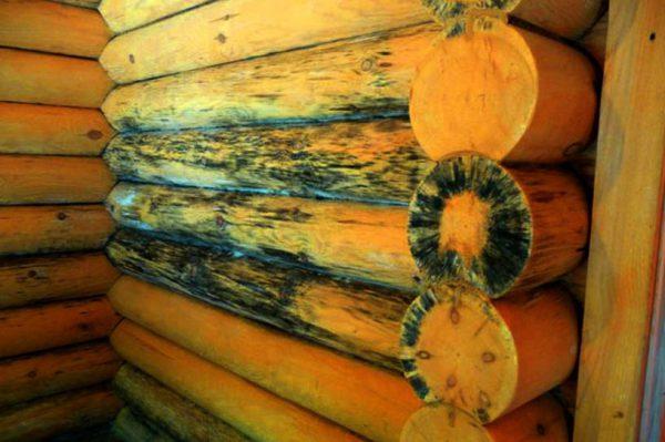 Дерев'яна поверхня уражена грибки синяви