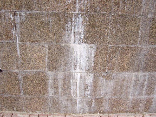 Білі висоли на гранітній плитці